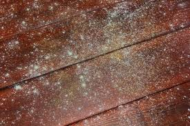 Removing Mold From Wood Furniture