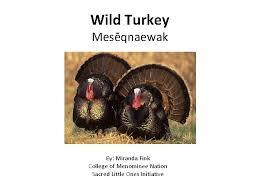 Wild Turkey Mesqnaewak By Miranda Fink College of