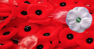 canadians are planning on wearing white poppies instead of red for remembrance day and people are