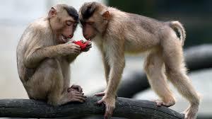 نتیجه تصویری برای monkey