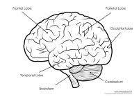 Neurology Human Brain Powerpoint Presentation Template Elegant Of ...