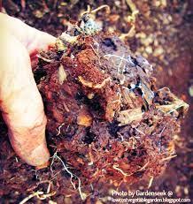 garden soil that grows plants