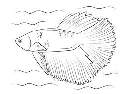 Small Picture Betta fish coloring pages Free Coloring Pages