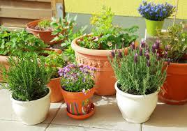 Small Picture Garden Design Garden Design with Terrace Gardening Tips Kerala