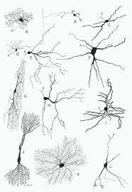 Neuronal Cytology