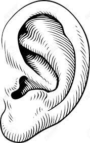 """Résultat de recherche d'images pour """"photo d'oreille humaine"""""""