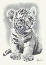 baby white tigers drawing. Brilliant White WILD ANIMAL PRINT OF AN ORIGINAL PENCIL DRAWING BABY TIGER SIZE A4 And Baby White Tigers Drawing