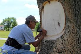 Woodcarver transforms Tanglebrook Park tree trunks – Jackson Township