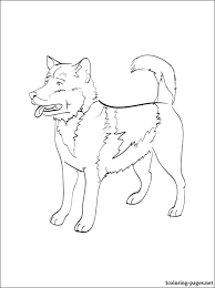 Small Picture Greenland Dog Coloring Page Coloring Pages Dog Breed Coloring