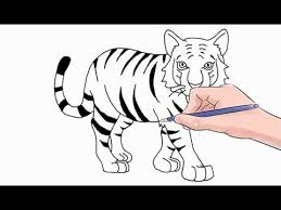 tiger drawing pictures. Plain Drawing How To Draw A Tiger Easy Step By On Drawing Pictures