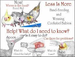 Cockatiel Diet Chart Less Is More Handfeeding Weaning Cockatiels