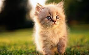 cute cats hd wallpaper