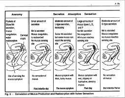 Natural Family Planning Mucus Chart Lifeissues Net Natural Family Planning Is It Scientific