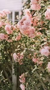 aesthetic vintage pink rose #wallpaper ...
