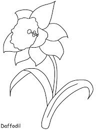 Daffodil Flowers Coloring Pages Coloring Page Book For Kids