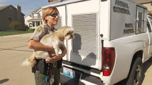 Image result for Animal Removal