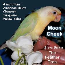 Green Cheeked Conure Mutation Colors Prediction Tables By