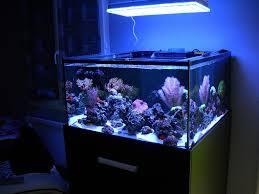 atlantik over nicolas 76 gallon reef aquarium