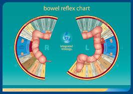 Integrated Iridology Bowel Reflex Chart