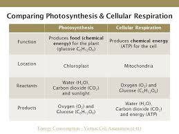 comparing photosynthesis cellular respiration