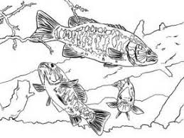 Small Picture Bass Fishing Coloring Pages Bass Fish Coloring Pages 2 bass