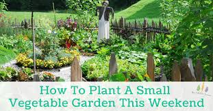 plant a small vegetable garden this weekend