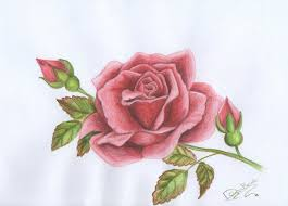 Small Picture rose drawing tumblr Buscar con Google Alexa Pinterest Rose