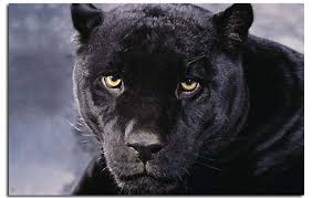 on black panther animal wall art with black panther canvas wall art picture print a1 30 inch 77 cm