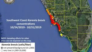 Fwc Low Levels Of Red Tide Detected Off Pinellas County