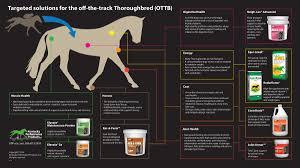 Off The Track Thoroughbred Ottb Kpp