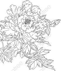 線画背景牡丹花 線画 花卉 牡丹の花画像素材の無料ダウンロードのための