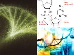 El ARN. Tipos y funciones - EspacioCiencia.com