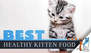 11 Best Kitten Foods With Our Most Affordable Pick 2019 Guide