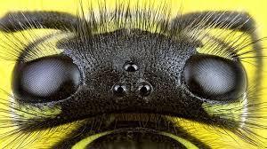 What Bit Me How To Identify Common Bug Bites Everyday Health