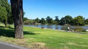 Image result for photo: lake weeroona