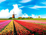 Images & Illustrations of HOLLAND