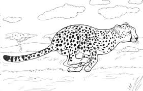Small Picture Cheetah Coloring Pages 2740