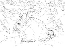 Small Picture Short Tailed Chinchilla coloring page Free Printable Coloring Pages