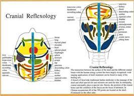 Cranial Reflexology Chart Cranial Reflexology 9789070281564 Amazon Com Books