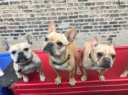 Dog day care services seize the play ® at camp! Dog Daycare In Chicago Il Pupstars