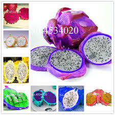 <b>Big Promotion</b>! <b>100 Pcs</b> Vanilla Strawberry hydrangea Flower ...