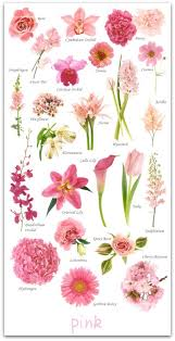 Flowers By Color Including Pink Red Orange Peach Yellow