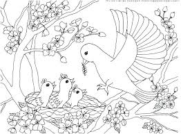 Printable Realistic Bird Coloring Pages Bird Coloring Pages Free