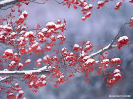 Free Nature wallpaper - Season Winter ...
