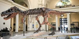 Image result for the skeleton went on display at the Field Museum of Natural History in Chicago.