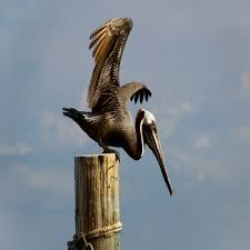 cool pelican decor