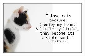 Pita Cat's Top 40 Cat Quotes Best Cat Quotes