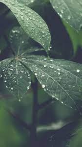 Rain Forest Wood Leaf Flower Nature ...