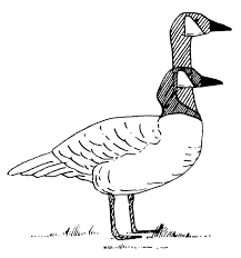 some common displays of canada geese from stokes a guide to bird behavior volume 1