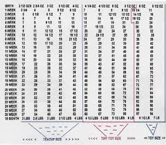Chihuahua Weight Chart In Kg Unfolded Chihuahua Weight And Growth Chart Weight And Bmi